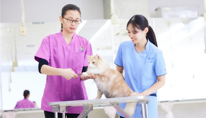 授業を教えてくれる先生は経営者や審査員など猫のスペシャリストです!