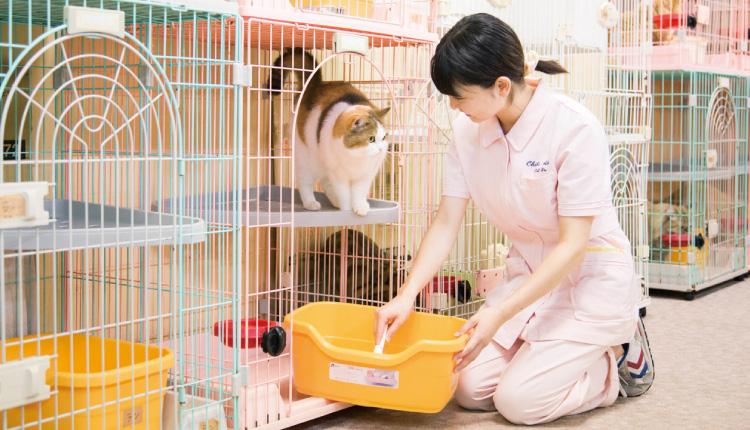 100匹が暮らす猫舎で飼育の勉強もします。
