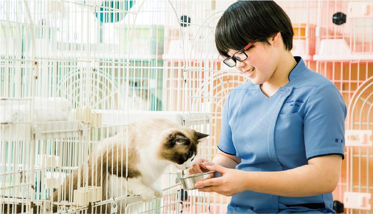 授業以外でも猫と触れ合うことができます。