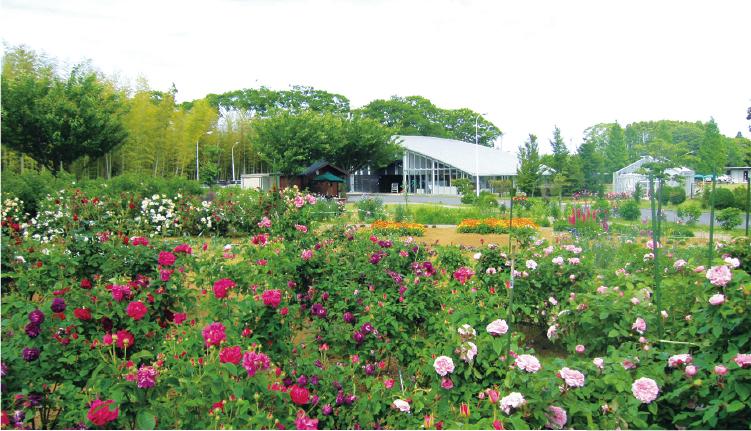 大自然に囲まれた長柄ガーデンでは、四季折々の植物を育成し、管理します。