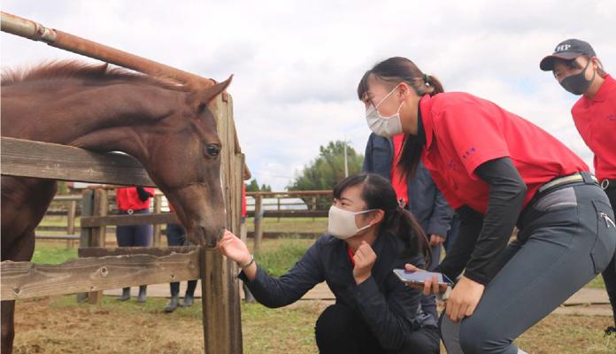 習熟度による馬術競技会への参戦
