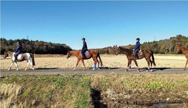 自然の中を自由に駈け抜ける外乗は乗馬の醍醐味!