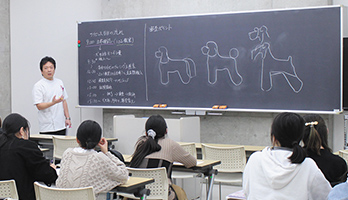 週に1度座学で就職・トリマー概論を学びます。
