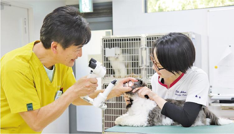 充実の3年間でより高度な動物看護師を目指す