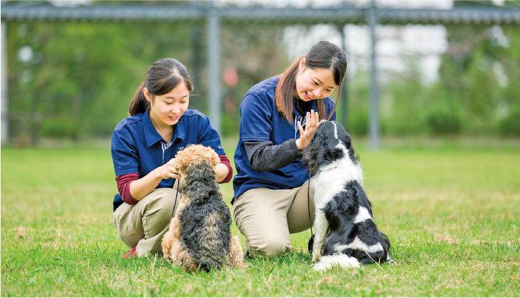 300頭のパートナードッグを扱い、様々な状況に対応できる力を養います。