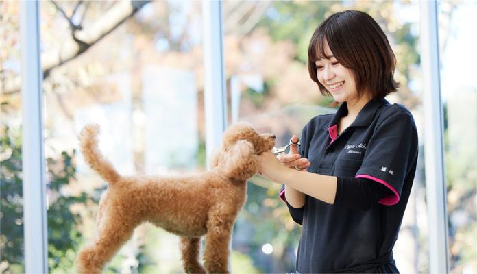 パートナードッグで基礎を学び、一般家庭犬でステップアップ