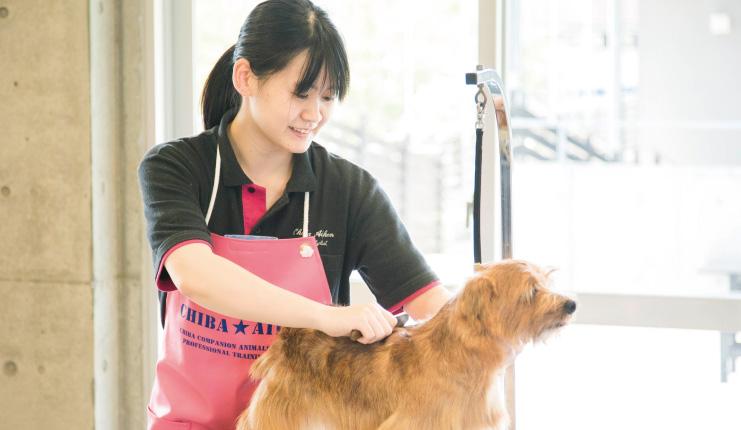 さまざまな犬種のトリミング技術を学びます。