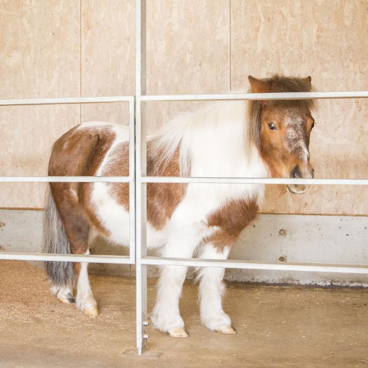 小動物園:ミニチュアホース施設
