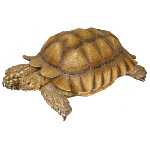 <h3 class='partner-modal-title'><span>バーリ(ケヅメリクガメ)</span></h3> <p class='partner-modal-text'>人が来るとご飯を期待して寄ってくる!小動物園一番の長老!!</p>
