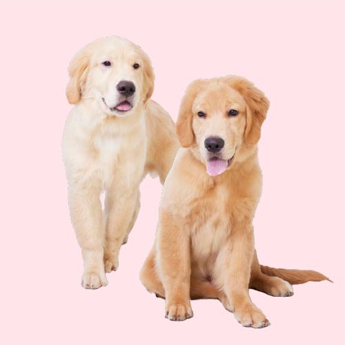 <h3 class='partner-modal-title'><span>エレン(ボーダーコリー)</span></h3> <p class='partner-modal-text'>ボーダーコリーらしくない男子。気分は小型犬。運動よりもナデナデされたいかまってちゃん♪</p>