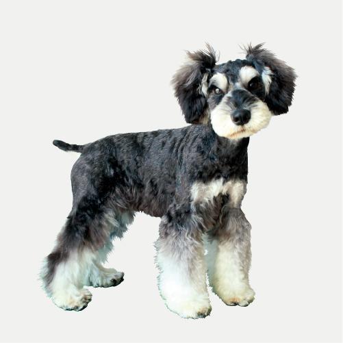 <h3 class='partner-modal-title'><span>大福(グレート・ピレニーズ)</span></h3> <p class='partner-modal-text'>ちば愛犬の看板犬!50キロの大きな体だけど、チワワにおもちゃを譲っちゃう優しい男子。 つねにヨダレが出るのでMYヨダレ掛けを持ってます。</p>