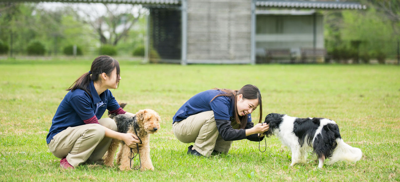 一般の飼い主の方へ モデル犬募集